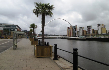 Wooden palm tree planter by the River Tyne