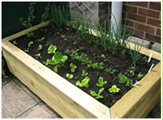 A small wooden vegetable planter