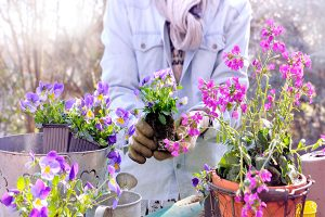 Gardener planting flowers in a pot