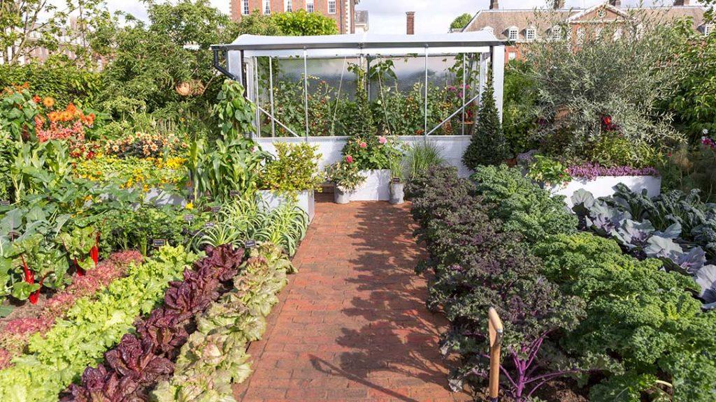 BBC2 Chris Evans Taste Garden