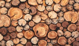Logs of Timber Wood