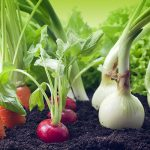 Vegetables growing in organic soil