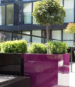 Purple Fibreglass planter