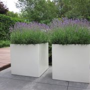 Square Fibreglass container planted with purple flowers