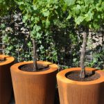 Small trees planted in round Corten Steel containers