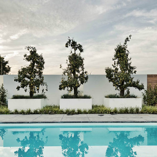 Large outdoor planters poolside