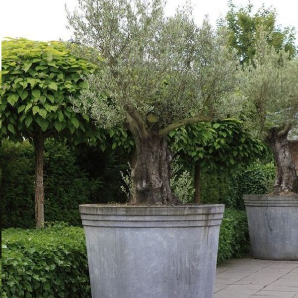Large Tree Planter made from Galvanised Steel