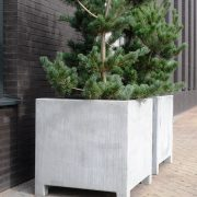 Tree potted in a large Steel Planter