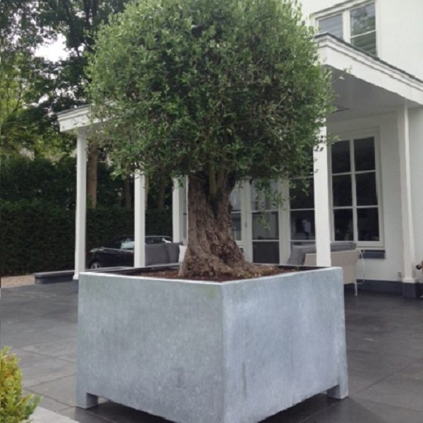 Sturdy steel container for planting a large tree