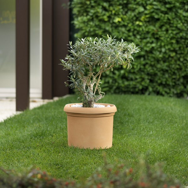 Vicenza Composite Pot planted with a small tree