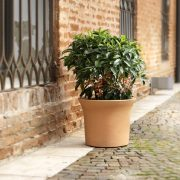 Small shrub planted in the Flora composite pot