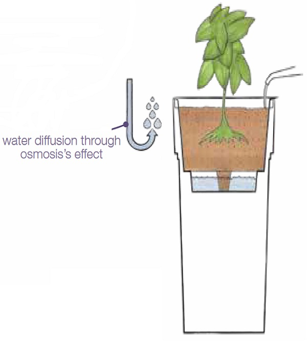 How our self-watering planters work