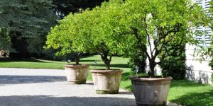 extra large garden pots planted with trees