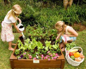 School Vegetable Garden 1