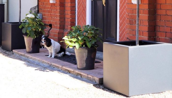 Buxus Planter by feather_and_faff_interiors