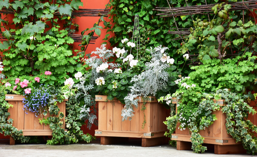 wooden planter boxes for growing plants