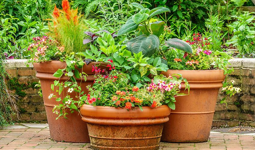 terracotta-planters